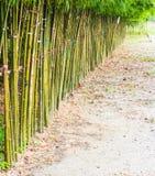 操刀的竹子 免版税图库摄影