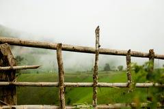 操刀草甸木夏天的向日葵 库存图片