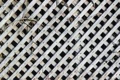 操刀草甸木夏天的向日葵 图库摄影