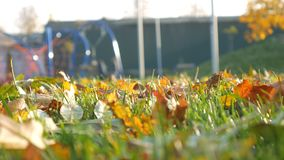 操场人放松秋天公园,林木 划分为的叶子 影视素材