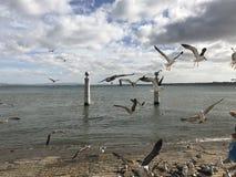 擦伤在里斯本,葡萄牙的堤防的飞行 免版税库存图片
