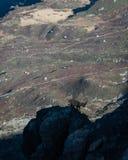 攀登下来rockface的山羊座 免版税图库摄影