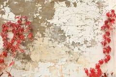 攀登大厦的门面的常春藤 免版税图库摄影
