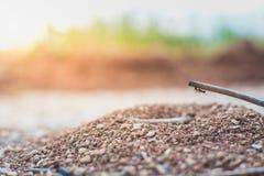攀登小分支的蚂蚁颠倒 期望 危险的克服的概念 免版税库存照片