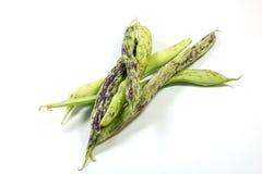 攀缘茎类的豆 库存图片