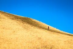 攀登陡峭的高小山的一个人在一个清楚的夏日 免版税库存图片