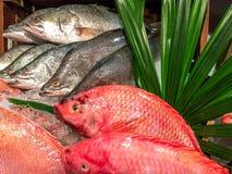 攫夺者鱼 免版税库存照片