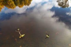 支持一根钓鱼竿在秋天在森林湖 免版税库存照片
