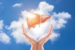 支持健康肝脏 免版税库存图片