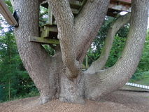 支持木建筑的树干 免版税库存图片