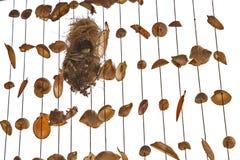 支持橄榄的sunbird在巢孵化 免版税库存照片