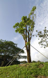 支持的结构树 图库摄影