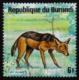 支持黑的狐狼犬属mesomelas,布隆迪,大约1975年 图库摄影