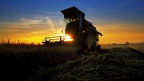 收割机会集麦子庄稼在日落 库存照片