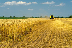 收割机在晴朗的夏日的联合收获麦子 免版税库存图片