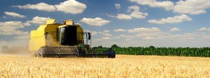 收割机在晴朗的夏日的联合收获麦子 库存照片