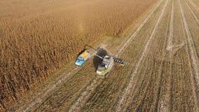 收割机收获玉米 在联合收割机帮助下收集玉米棒子 在领域的成熟玉米 影视素材