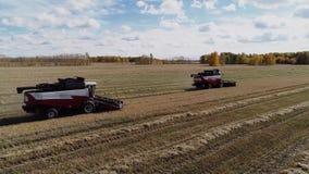 收割机结合工作在工业秋天农厂黑麦领域 股票录像
