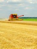收割机联合收获麦子 免版税图库摄影