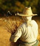 收割的麦子妇女 免版税库存照片