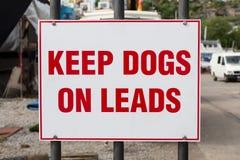 收留在线索的狗 免版税库存照片