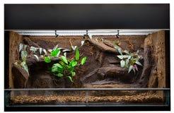 收留热带密林动物的玻璃容器 库存照片