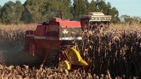 收获一块麦地在一个晴天 股票视频
