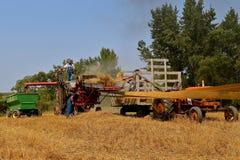 收获与打谷机的麦子 免版税库存照片