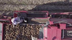 收获与组合的土豆 股票录像