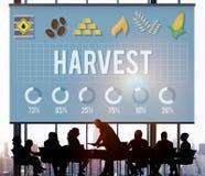 收获农业农夫自然自然成熟概念 免版税库存照片