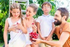 收获和吃樱桃的家庭在庭院里 库存照片