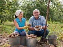 收获土豆的夫妇 免版税库存照片