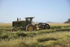 收获在一个南非农场的油菜 免版税库存图片