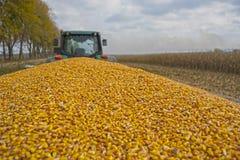 收获在一个领域的玉米与一个现代组合在一阴天,跟随由装载在卡车上 免版税库存图片