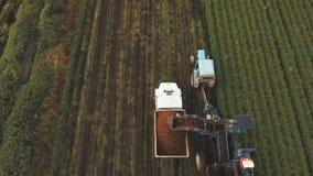收获在农夫` s领域的红萝卜 鸟瞰图 股票录像