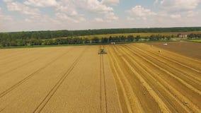 收获在农田的麦子在路和森林附近 影视素材