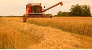 收获在夏天下午的大麦 免版税库存图片