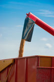 收获在夏天期间的结尾的麦子 免版税库存图片