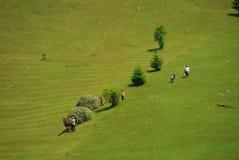 收获在特兰西瓦尼亚的干草 库存照片