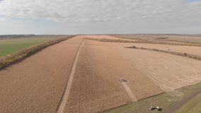 收获在秋天地平线天线的玉米,从空气的射击 股票录像