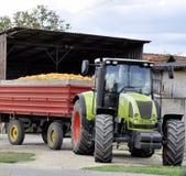 收获在秋天季节的拖拉机的农夫玉米 免版税库存图片