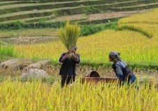 收获在米的人们在Mu Cang柴,越南调遣 库存照片