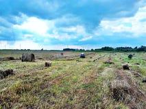 收获在西伯利亚的干草 免版税库存照片