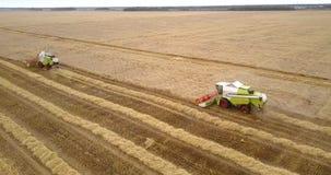 收获在金黄领域的麦子过程由组合 股票视频