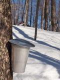 收获在魁北克,加拿大的槭树树汁 免版税库存图片