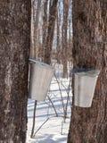 收获在魁北克,加拿大的槭树树汁 免版税库存照片