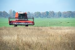 收获大豆的领域农夫收割机 库存照片