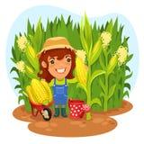 收获女性农夫在玉米田 库存图片