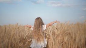 收获季节,小孩女孩横跨滑她的在成熟麦子的金黄小尖峰的领域跑手 股票录像