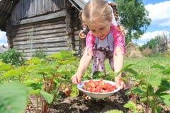 收获家种的庭院的小白肤金发的女孩 免版税库存照片